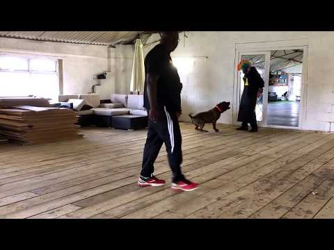 XXL Bully protection training