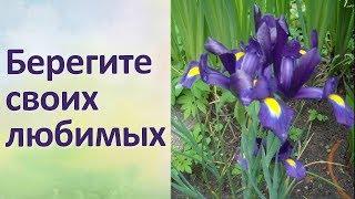 Красивая песня Красивые цветы