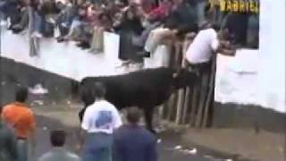 Repeat youtube video Angry Bull August 2015