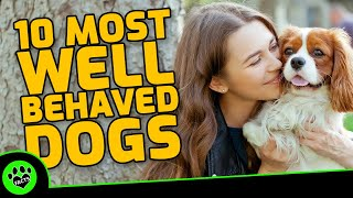 Top 10 Most Well Behaved Dog Breeds  TopTenz