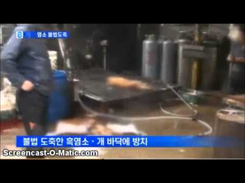 Illegal slaughter of dogs and black goats and injecting water $1.8 Mil ...