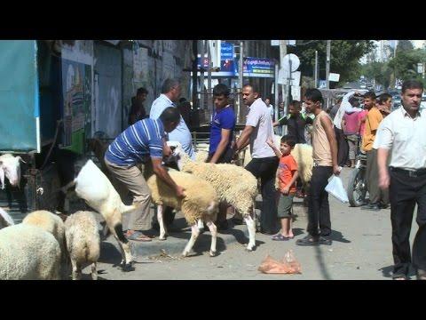 Popular Gaza Eid Al-Fitr Feast - hqdefault  Best Photo Reference_34182 .jpg