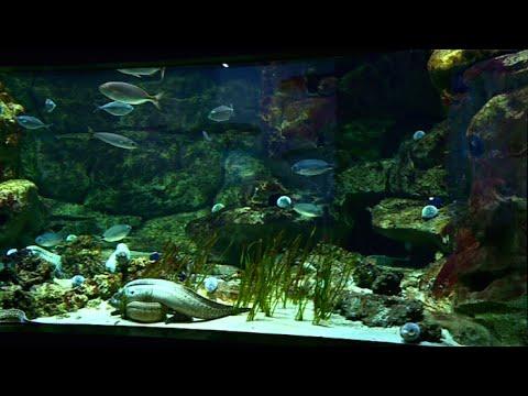 Aquarium du Trocadéro : l'un des plus beaux de France