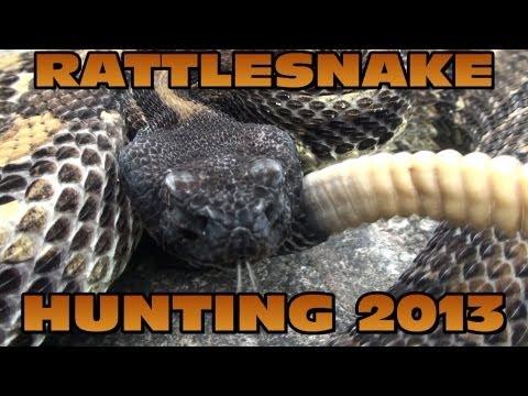 Pennsylvania Rattlesnake Hunting 2013 #2