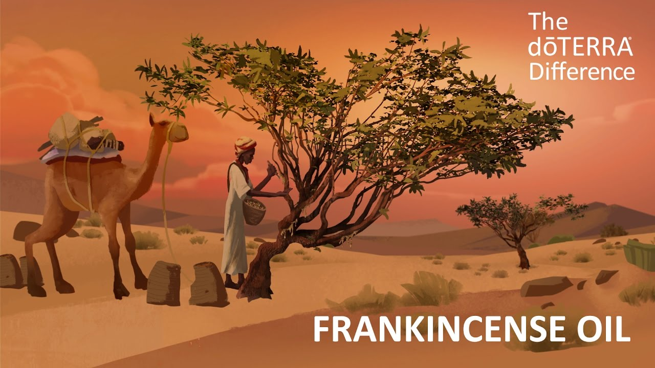 Where can i get frankincense