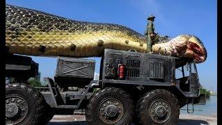Cooking | Cobra gigante encontrada no Mar Vermelho