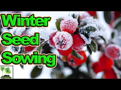 What To Sow For Winter