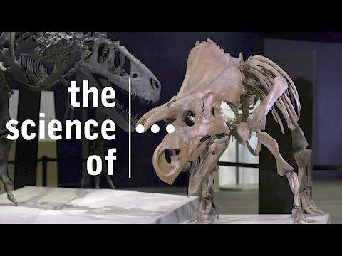 """""""Ava""""... A new species of Ceratopsian Dinosaur (Darwin & Dinosaurs)"""