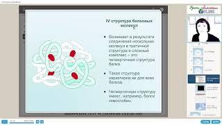 Белки. Химический состав клетки.  Видеоуроки биологии на egebio.ru