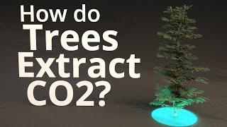 How Do Trees Extract CO2?