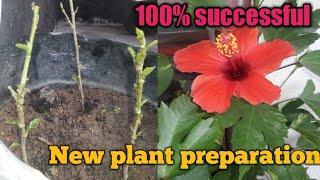 100% successful - new plant preparation update video