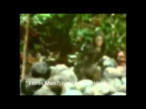 """The  """"Flores Man """": nicknamed the """" Hobbit """" !"""