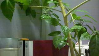 CANYON CNR-WCAM820 - On Desk.ogv