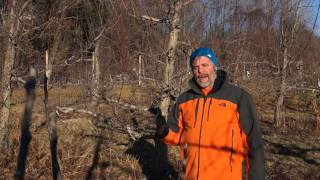 Pruning Tip #1 - Start pruning after the New Year