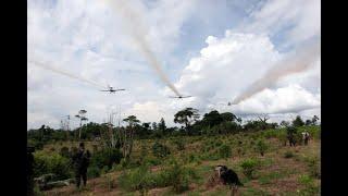 En cuatro meses retomarían aspersión aérea con glifosato en Colombia
