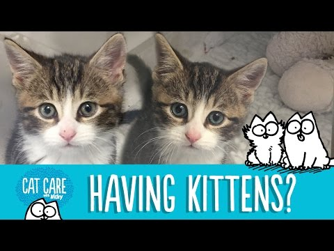 Thumbnail: Simon's Cat Care: Should You Get A Kitten?