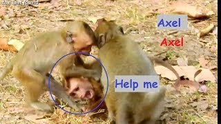 Million pity !! Orphan Axel try T0 move out from 2 monkeys, what happpen? please help Orphan. thumbnail