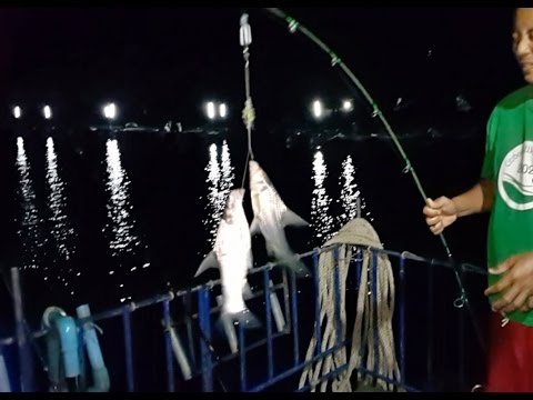ตีเหยื่อสูตรตกปลาหน้าดินต้นน้ำแม่กลองข้ามคืนหมายใกล้กระชังปลา Fishing ground fish