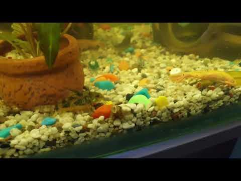 Аквариум 200 литров, вместе живут тритоны, раки, лягушки, рыбки и улитки.