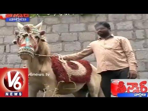 Karimnagar Horse Story - Teenmaar News. V6 News Telugu