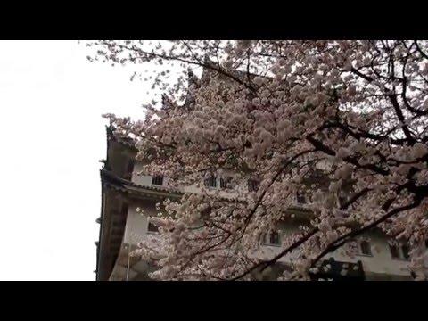 Japan Study Abroad Travels in Nagoya!