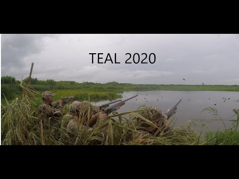 Teal Season 2020 - Duck Hunting