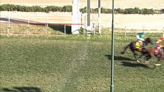 Vidéo de la course PMU PREMIO EL LIBANO H.