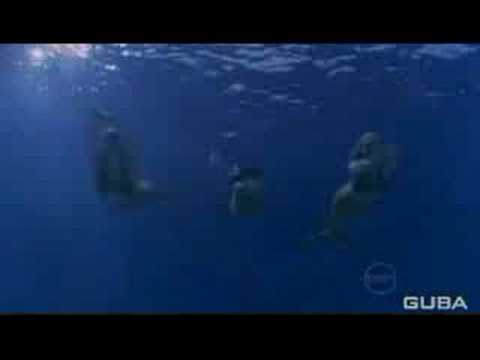 H2o just add water opening credits season 2 youtube for H2o just add water film