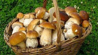 Как жарить грибы!!!