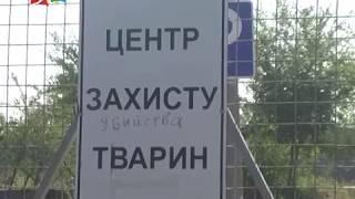 Объектив 24 07 18Голобродский о ситуации на КП Центр защиты животных