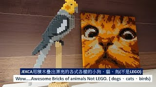 Wow....Awesome Bricks of animals Not LEGO. ( dogs、cats、birds)JEKCA用積木疊出漂亮的各式各樣的小狗、貓、鳥(不是LEGO)