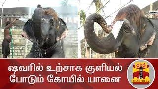 ஷவரில் உற்சாக குளியல் போடும் கோயில் யானை   Kovil Elephant   Mannargudi