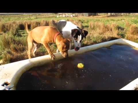 CUTE PUPPIES TRIES TO RETRIEVE BALL FROM WATER
