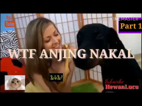 Kakak cantik lagi main sama anjing hitam|seksi banget kak mainnya|part 1 |8 juta views