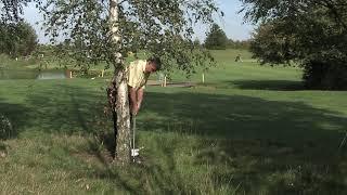 Awkward Lies - Tree in the Way