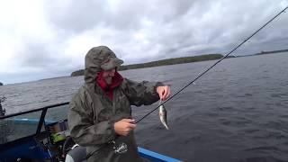 Рыбалка на Сайме Лето Окунь Щука