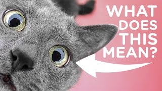4 Things Your Cat is Trying to Tell You with Jackson Galaxy