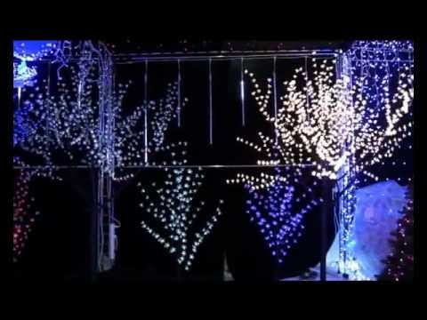 Светодиодные деревья - YouTube