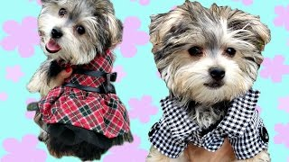 Zumi Fashion Show Costumes * DCTC Puppy Clothes * Dress-up