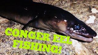 CONGER FISHING / BAIT FISHING