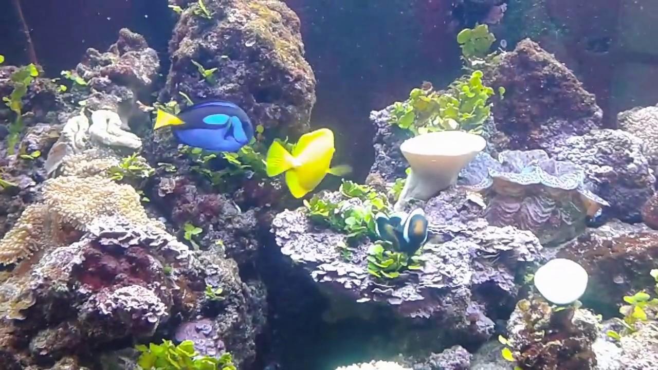 aquarium poissons d 39 eau de mer dory n mo youtube
