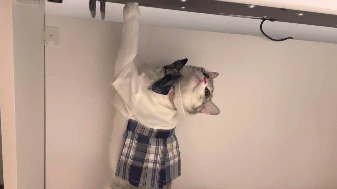小貓把鋼琴當貓抓板結果爪子被卡住 拔不出來還瘋狂哈氣