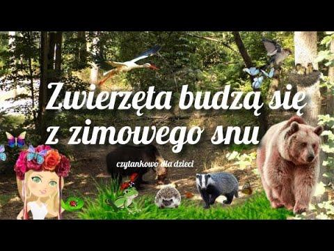 jakie-zwierzęta-budzą-się-z-zimowego-snu?-(odc.-78)