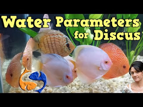 Best Water Parameters For Discus!! Talkin Discus Presented By KGTropicals!!