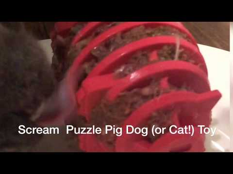 scream-rubber-puzzle-pig-dog-(or-cat!)-toy-in-action