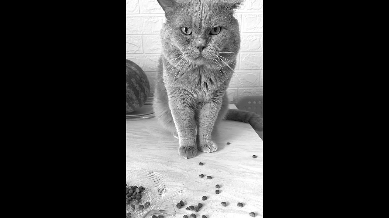 I HATE WHEN THIS HAPPENS 😔 Poor cat