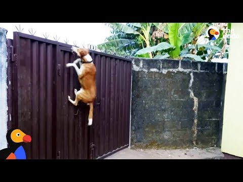 Dog Escape Artists Compilation | The Dodo
