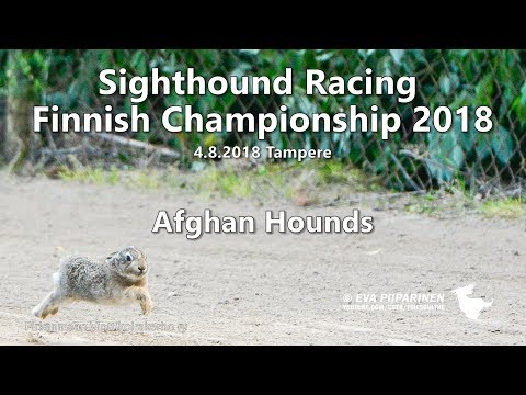 Sighthound Racing Finnish Championship 2018  ► Afghan Hounds