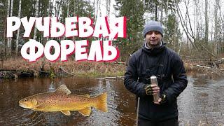 Ловля ручьевой форели в Эстонии Удалось снять стайку форели под водой