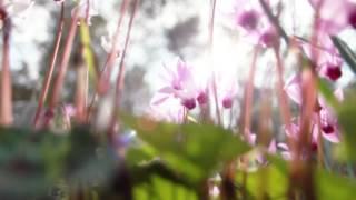 Feel Again (DC Landon Remix) - OneRepublic.mp4